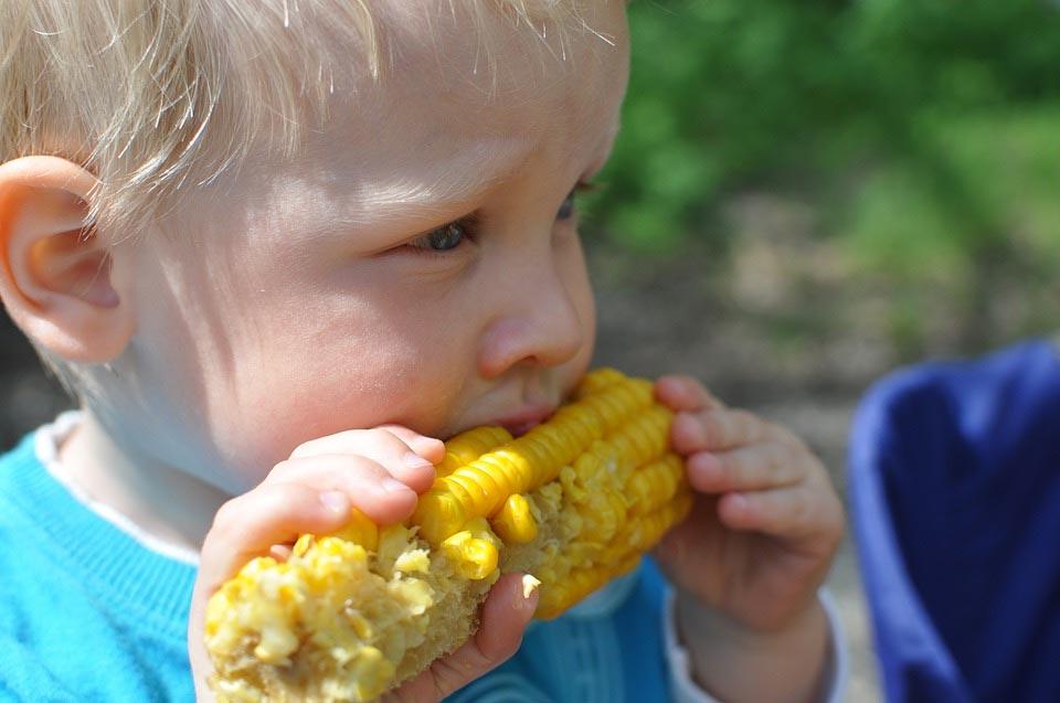 Ein kleiner blonder Junge kaut an einem Maiskolben